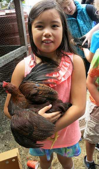 9-10-16-rp-wkday-chickens_img_7510