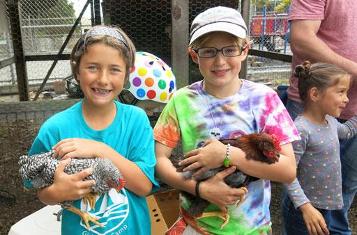 9-10-16-rp-wkday-chickens_img_7517