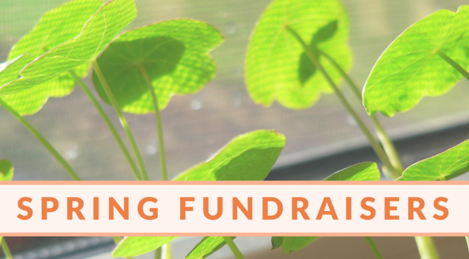 Spring Fundraisers